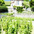 Vineyard of Chateau Grillet, Rhone-Alpes, France - ストック写真