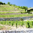 Vineyard of Chateau Grillet, Rhone-Alpes, France — Stock Photo