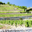 Vineyard of Chateau Grillet, Rhone-Alpes, France — Stock Photo #11423899