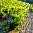 Vineyards near Gigondas, Provence, France — Stock Photo #11423969
