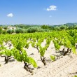 Vineyards near Bandol, Provence, France - Stock Photo