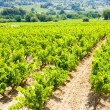 Vineyards near LCadiere d'Azur, Provence, France — Stock Photo #11424132