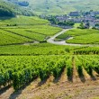Постер, плакат: Vineyards near Fuisse Burgundy France
