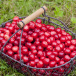 Stock Photo: Cherries in basket