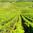 Grand cru vineyards of Echezeaux, Burgundy, France — Stockfoto
