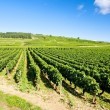 Vineyards of Cote de Beaune near Pommard, Burgundy, France — Stock Photo