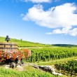Vineyards of Cote de Beaune near Pommard, Burgundy, France — Stock Photo #11426008