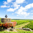Vineyards of Cote de Beaune near Pommard, Burgundy, France — Stock Photo #11426020