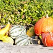 Still life of pumpkins — Stock Photo #11427143