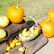 Still life of pumpkins — Stock Photo