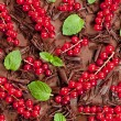 Red currant and mint with chocolate — Photo