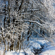 Jeseniky Mountains in winter, Czech Republic — Stock Photo