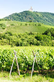 Vineyards with castle Ortenbourg, Alsace, France — Stock Photo