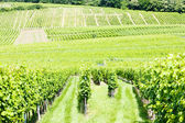 Vineyards around the village of Hunawihr, Alsace, France — Stock Photo