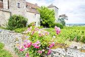 Gevrey-Chambertin Castle, Cote de Nuits, Burgundy, France — Stock Photo