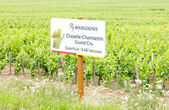 Grand cru vineyard of Chapelle-Chambertin, Cote de Nuits, Burgun — Stock Photo