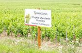 Grand cru vineyard of Chapelle-Chambertin, Cote de Nuits, Burgun — Stock Photo