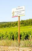 Grand cru vineyards Chambertin, Burgundy, France — Stock Photo