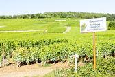 Grand cru vineyards of Richebourg, Burgundy, France — Stock Photo