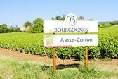 Vineyards of Aloxe-Corton, Burgundy, France — Stock Photo