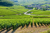 Vineyards near Fuisse, Burgundy, France — Stock Photo
