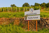 Vineyards of Pouilly-Fuisse, Cote Maconnais, Burgundy, France — Stock Photo