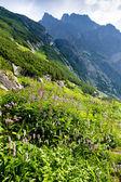 Great Cold Valley, Vysoke Tatry (High Tatras), Slovakia — Stock Photo