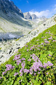 Valley under Prielom, Vysoke Tatry (High Tatras), Slovakia — Stock Photo