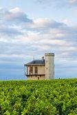 Vineyards of Clos Blanc De Vougeot Castle, Burgundy, France — Stock Photo