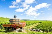 Vineyards of Cote de Beaune near Pommard, Burgundy, France — Stock Photo