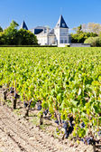 Vineyard and Chateau Tronquoy Lalande, Saint-Estephe, Bordeaux R — Stock Photo
