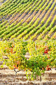Vineyars near Tautavel, Languedoc-Roussillon, France — Stock Photo