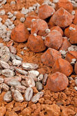 Chocolate truffles and cocoa beans in cocoa — Stock Photo