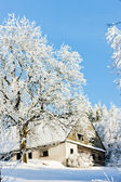 Cottage in winter, Jeseniky, Czech Republic — Stock Photo