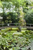 Botanical Garden Na Slupi, Prague, Czech Republic — Stock Photo