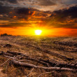 Sunset over old dead trees — Stock Photo