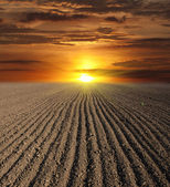 Sunset over ploughed field — Stock Photo