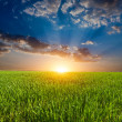 Sunset over field in steppe — Stock Photo