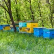 Apiary in forest - Stock Photo