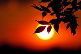 Brunch on unfocused sun background — Stock Photo