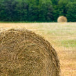 Stock Photo: Haystacks on filed