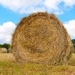 Stock Photo: Haystacks on filed in cloudy day