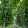 Alley in park — Stock Photo