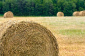 Haystacks on the filed — Stock Photo