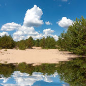 Lake in pine forest — Stock Photo