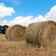 Haystacks on filed — Stock Photo