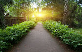 Pathway in park — Stock Photo