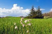 Zelená louka — Stock fotografie