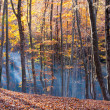 Autumn in beech forest — Stock Photo