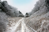 Dirty road in winter forest — Stock Photo